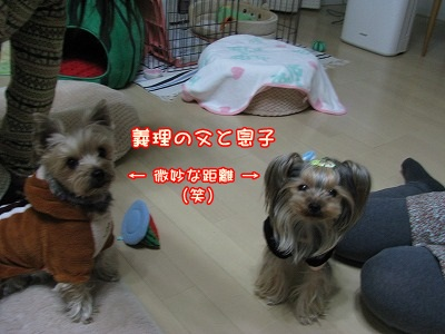 IMG_0211_20120227161232.jpg