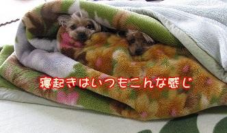 IMG_0363_20120316083541.jpg