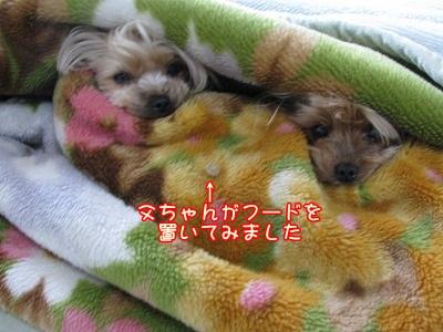 IMG_0365_20120316083540.jpg