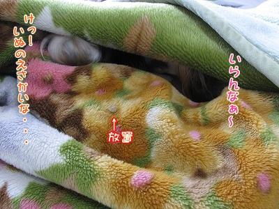 IMG_0366_20120316083540.jpg