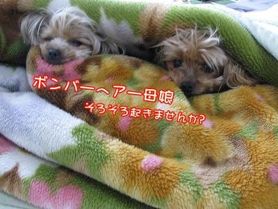 IMG_0369_20120316083538.jpg