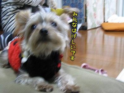IMG_2011_20111219192648.jpg