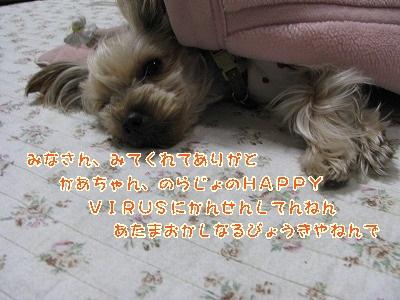 IMG_2153_20111212210439.jpg