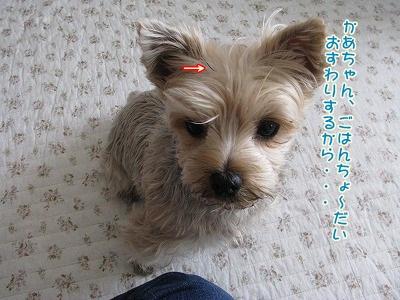 IMG_2158_20111230092125.jpg