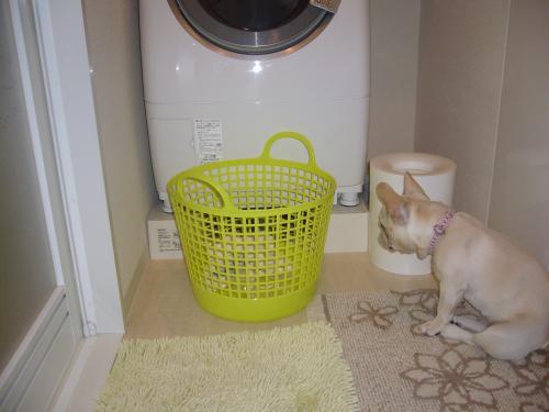 洗濯機前2