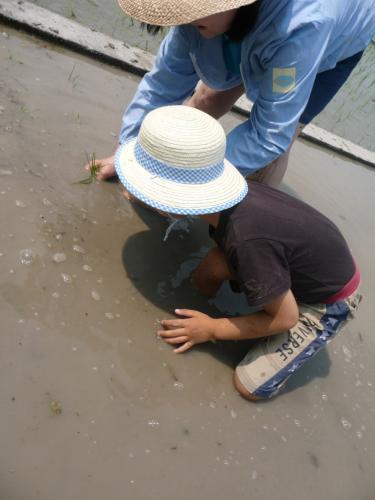 田植え??(とは名ばかりの泥遊び)2011.06.04-02