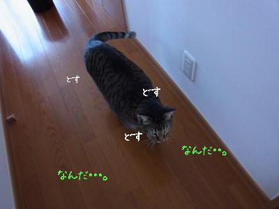 RIMG0647.jpg
