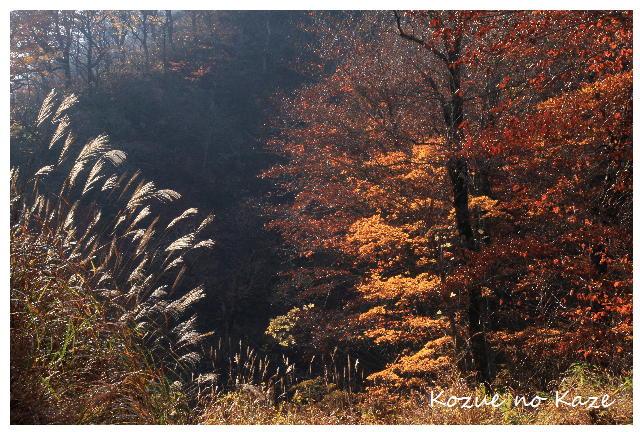 秋の木々7