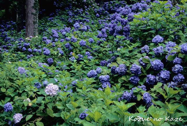 初夏の花17
