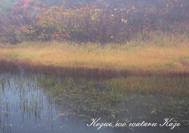 湿原の秋2