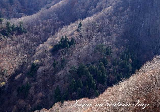 晩秋の山1