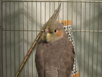 見返り美鳥?