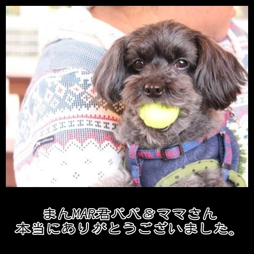 4_2013120208432148c.jpg