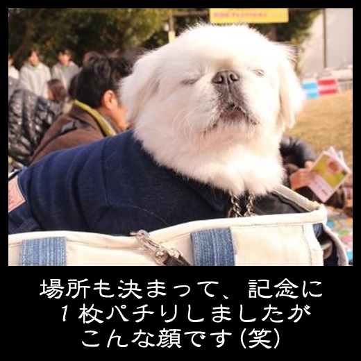 91_20131212114647203.jpg