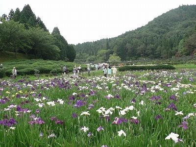 永沢寺はなしょうぶ園