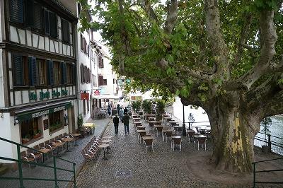 ストラスブール 樹齢400年のプラタナス