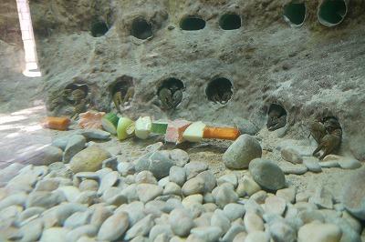 水族館のザリガニです