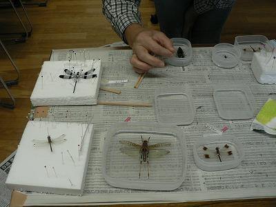 お気に入りの昆虫を持参して作成