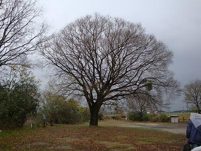 木津川孤高の木