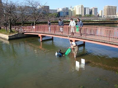大川潜水して貝を採取