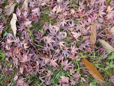 落ち葉です