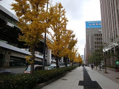会社近くの中央大通り沿いのイチョウ並木