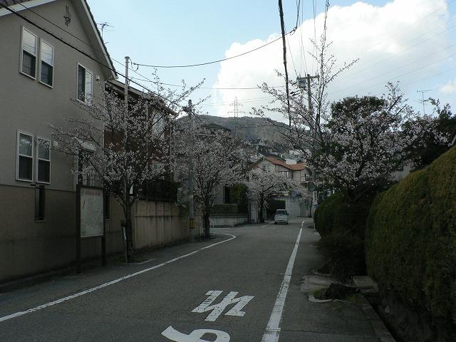 桜道01入り口