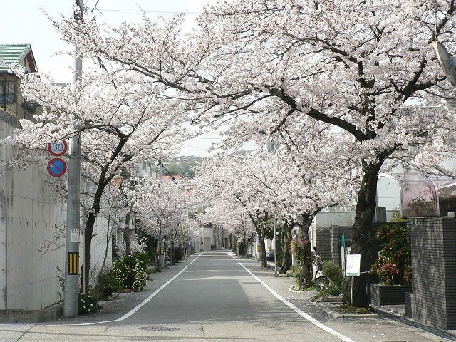 桜道02入り口