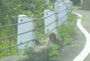 猿三匹いる!