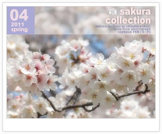 1104sakuracollection09