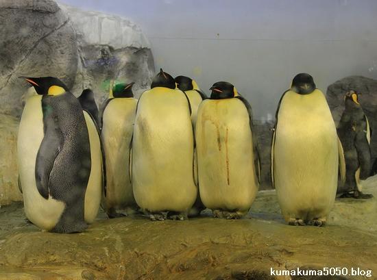 エンペラーペンギン_1