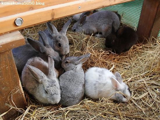 ウサギ_2