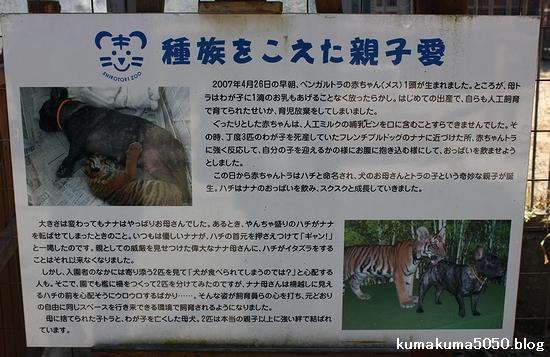 しろとり動物園_10
