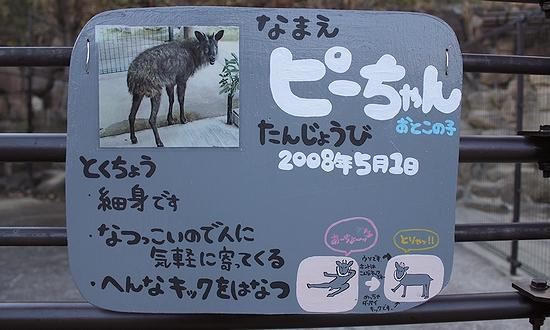 とくしま動物園_5