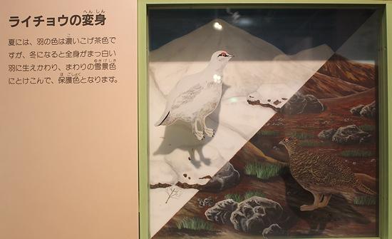 王子動物園_9