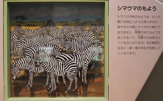 王子動物園_7