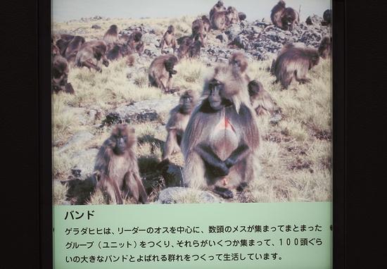 王子動物園_13