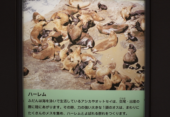 王子動物園_11