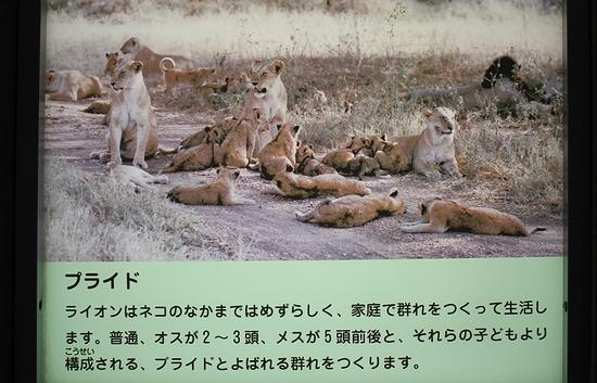 王子動物園_10