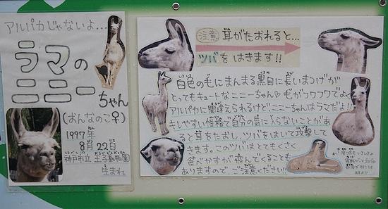 王子動物園_15