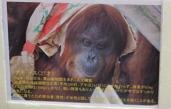 東山動植物園_9
