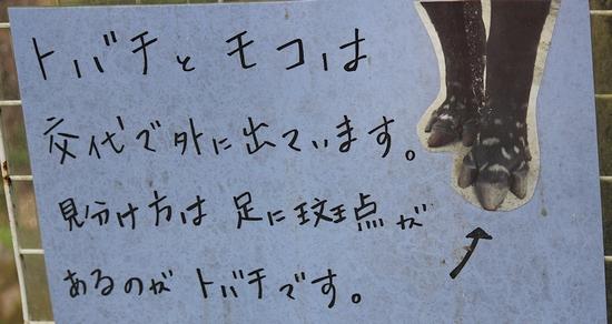 東山動植物園_11