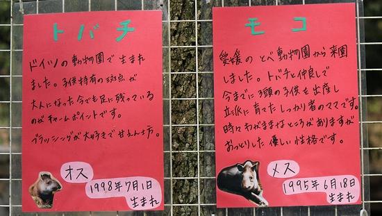 東山動植物園_10