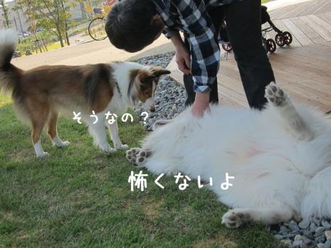20111008_07.jpg