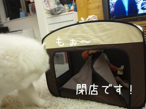 20130130_07.jpg