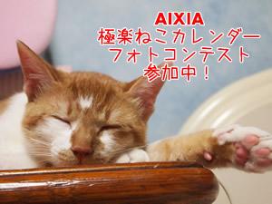 aixia.jpg