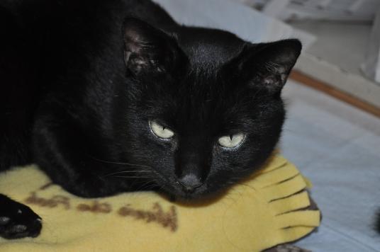 20130106 黒猫さん 2