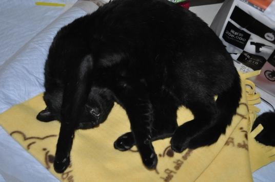 20130106 黒猫さん 5