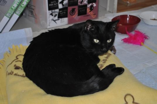 20130106 黒猫さん 3