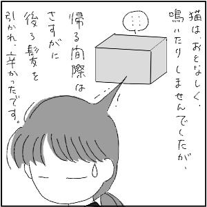20130113 黒猫さん 24